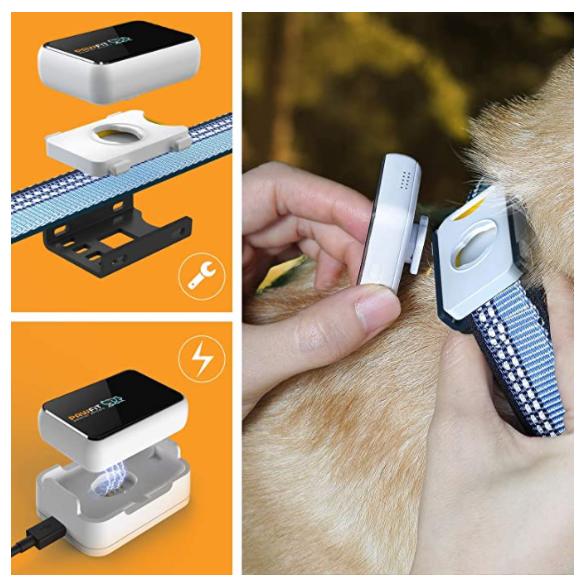 pawfit 2 Hunde GPS.PNG