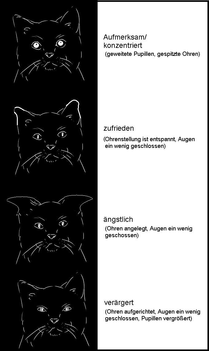 Ohrenstellung der Katze.jpg
